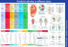 Plakát Funkční okruhy a reflexní zóny - český text